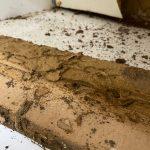 termite-damage-4